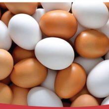 رئیس اتحادیه فروشندگان پرنده و ماهی گفت: هرکیلو تخممرغ در واحدهای صنفی با قیمت 6 هزار و 250 تومان به فروش میرسد که نسبت به هفته اخیر با افزایش نسبی همراه بوده است.