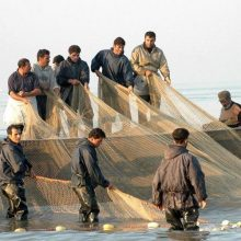 تمدید دوباره فصل صید ماهیان استخوانی در گیلان