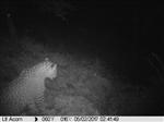 مدیرکل حفاظت محیط زیست گیلان گفت:مامورین یگان حفاظت اداره حفاظت محیط زیست شهرستان املش، با نصب دوربین تله ای موفق به ثبت تصویر از یک قلاده پلنگ ایرانی شدند.