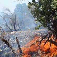 در افروختن آتش در مناطق جنگلی توجه جدی داشته باشند تا شاهد بروز سوانح آتشسوزی در جنگل در این مناطق و از بین رفتن جنگل و گونه های جانوری و گیاهی نباشیم