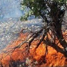 به منظور کاهش خطر آتش سوزی در جنگلهای گیلان با صدور اطلاعیهای خواستار توجه بیشتر مسافرین و گردشگران به مسایل ایمنی در استفاده از آتش در این مناطق شد.