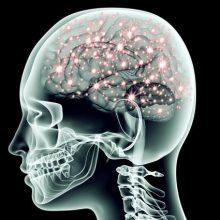 محققان تحقیقات جدیدی را انجام دادهاند آنها در این پژوهش از سیمکشی(مدارهای عصبی) مغز بیماران روانی که سبب بروز رفتارهای ناهنجار میشود پرده برداشتند.