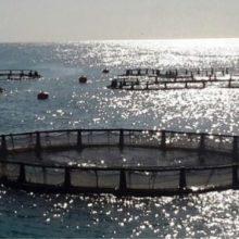 این طرح مهم شیلاتی ، با نصب 24 قفس پرورش ماهی در قفس های دریایی در گیلان ، درشرق، غرب و مرکزاستان در حال اجراست.