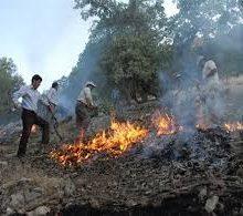 آتش زدن نيزارهاي تالاب توسط تالاب خواران انزلی ، تعدادی از پرندگان مهاجر را به طرز دردناکي به کام مرگ برده است.متهمان به آتشسوزی عمدی