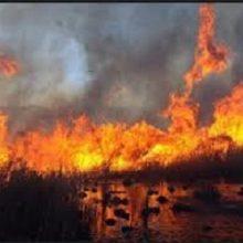 متاسفانه امروز قسمتهایی تالاب انزلی در منطقه خزر ویلا، دو نقطه در سنگاچین و نرسیده به جایگاه پیشین دفن زبالهبه آتش کشیده شد. تالاب انزلی به آتش کشیده شد