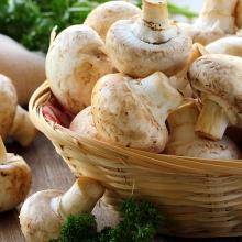 محققان دانشگاه پنسیلوانیا در بررسیهای خود متوجه شدند مقادیر بالایی از دو نوع آنتیاکسیدن در قارچ وجود دارد که در مقابله با پیری نقش مؤثری دارند.