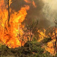 مدیرکل ستاد مدیریت بحران گیلان از اطفای کامل آتشسوزی در جنگلهای گیلان خبر داد و گفت: در حال حاضر کل آتشسوزی در شهرستانهای استان گیلان مهار شده و آتشسوزی فعالی نداریم.