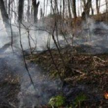 مدیرعامل جمعیت هلال احمر استان گیلان گفت: بخشهایی از جنگلهای گیلان که تا پیش از این آتش آنها مهار نشده بود؛ بر اثر بارش باران خاموش شدند.
