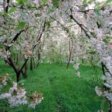آسمان استان گیلان تا پایان هفته کنونی آفتابی است. پایداری هوا در استان گیلان