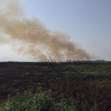 به گفته مردم محلی محدودهای به وسعت سه هکتار در منطقه ماراگوده شهرستان انزلی در حاشیه تالاب بر اثر حریق سوخت. آتش زدن تالاب انزلی