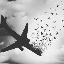 سازمان هواپیمایی کشوری با انتشار گزارش مقدماتی سقوط هواپیمای پرواز تهران-یاسوج به انجام عمل قلب باز خلبان این پرواز و بی توجهی هواپیمایی آسمان به این محدودیت اشاره کرده است.