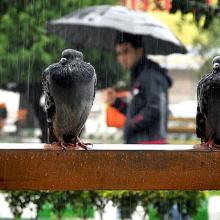 کارشناس سازمان هواشناسی از بارش باران در آسمان ۳۰ استان کشور خبرداد. بارش باران و رگبار