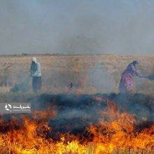 هشدار به کشاورزان که کاه و کلش برنج را می سوزانند