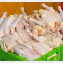 مرغ به کیلویی 11 هزار تومان رسید