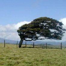 وزش باد گرم در گیلان تا فردا