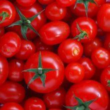 دلیل افزایش دو برابری قیمت گوجه فرنگی