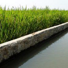 افزایش دمای هوای در استان گیلان برای توزیع عادلانه آب و جلوگیری از مشکلات احتمالی در مصرف آب کشاورزی ، نوبت بندی آب را در دستور کار خود قرار داده است