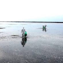 رئیس اداره پارک ملی بوجاق گفت:با توجه به شیوع آنفولانزای فوق حاد پرندگان و تلفات شدید در این پارک، دانه پاشی برای ماندگاری پرندگان آلوده انجام شد.