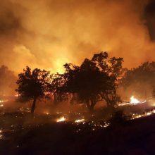 مدیرعامل جمعیت هلال احمر استان گیلان با تأیید خبر وقوع آتشسوزی در جنگلهای برخی مناطق این استان، توضیحاتی درباره اقدامات امدادی و اطفاء حریق ارائه داد. آتشسوزی در جنگلهای گیلان