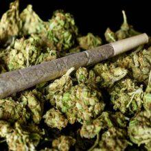 براساس آخرین شیوع شناسی تعداد معتادان کشور به دو میلیون و ۸۰۰ هزار مصرف کننده مستمر رسیده است و مخدر «گل» بعد از تریاک، دومین ماده مخدر مصرفی در کشور معرفی شده است.