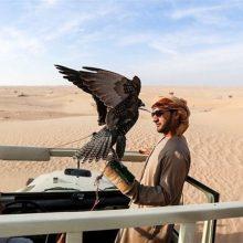 حسین علینژاد اظهار داشت: مهمترین خطری که انواع گونههای شاهین گیلان از جمله شاهین بحری را تهدید میکند
