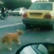 تکرار سگآزاری در شفت/ محیط زیست اقامه دعوی کرد