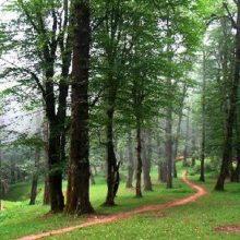 """رئیس انجمن جنگلبانی ایران گفت: با وجود اجرای """"طرح تنفس"""" در حال حاضر ۴۲ درصد از جنگلهای شمال در معرض نابودی است."""